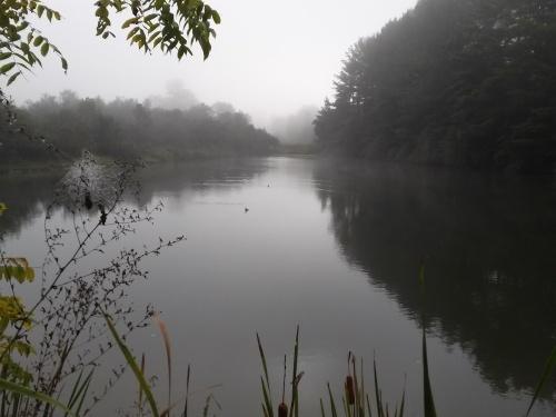 Two grebes have a pond to themselves on a foggy morning in Blacksburg, Virginia, September 21, 2014.