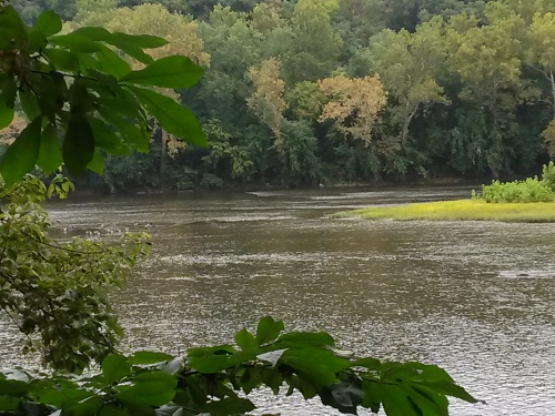 Potomac River and Pawpaw at Nat Cons Tr Ctr Shepherdstown Sep25 2014