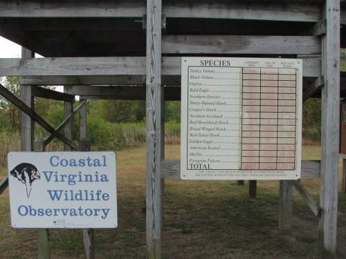 USED Nov09NewsSupplement 033 Virginia Coastal Wildlife Obs raptor list Oct7