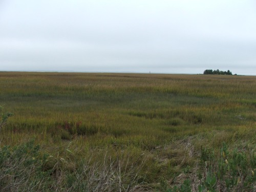 009 Marshland at Wachapreague Oct6 2007USED Grouper 3-14-16