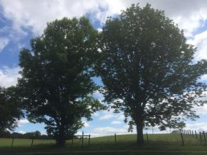 376 image 02 - Twin ashes Foxridge Pond bike path Jul8 2017 USED Radio 376