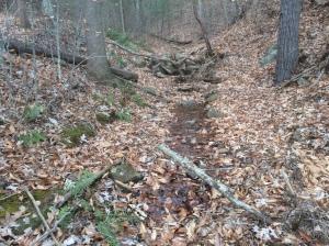 397 Image Brush Mountain stream Dec2 2017