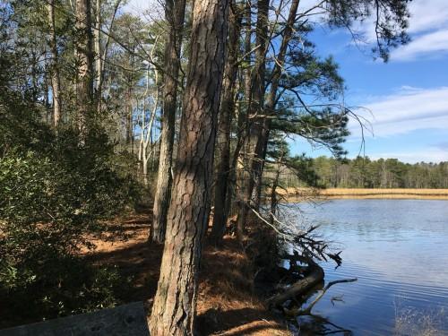 Bush Mill Natural Area Preserve by Leslie Middleton