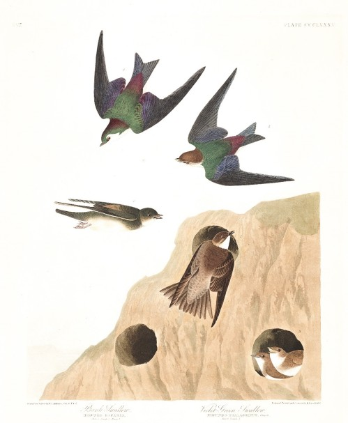 516 Image 2 swallows
